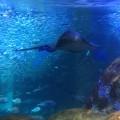 新江の島水族館に行ってきました
