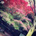 秋という季節について