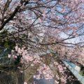 春は変化が多い季節